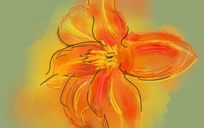 The healing properties of the Day Lily