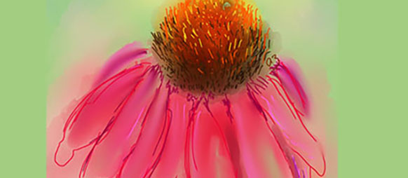 The medicinal power of echinacea