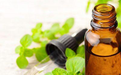 A powerful antibacterial essential oil – Oregano