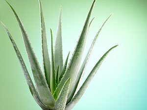 the healing benefits of aloe vera